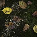 写真: 初秋の御苑