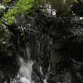 Photos: 雨の御苑