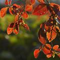 写真: 色づく都心