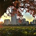 写真: 落日「不忍池」