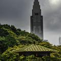 Photos: 六角花壇