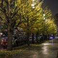 写真: 夜のイチョウ並木