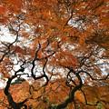 タムケ山紅葉