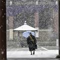 Photos: 雪の本門寺