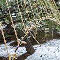 Photos: 春の淡雪