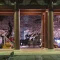 Photos: 夜桜「池上本門寺」