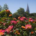 バラ咲く御苑
