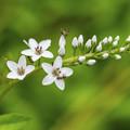 Photos: 花の名教えてください。