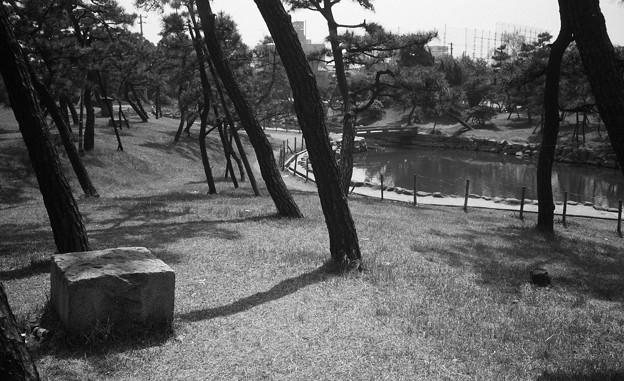 S53_大浜の松