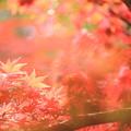 秋の温もり
