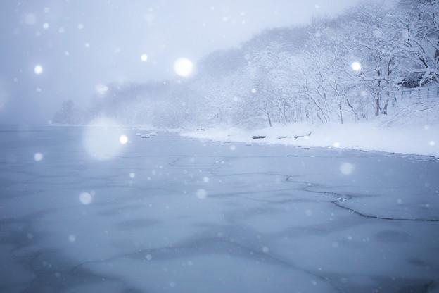 雪に魅せられ
