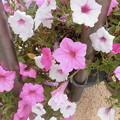 写真: 咲く花
