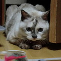 Photos: 遊ぶムギ.3