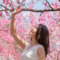 写真: 花桃づくし