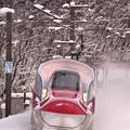 写真: 冬真っ盛り3