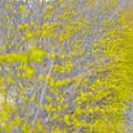 春のみどり色