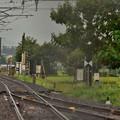 Photos: 8月の冷たい雨3