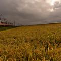 Photos: 稲刈り3