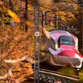 Photos: 紅葉のトンネル2