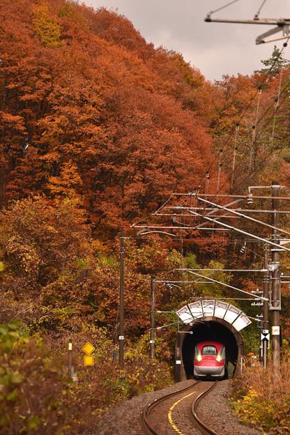 紅葉の刺巻トンネル