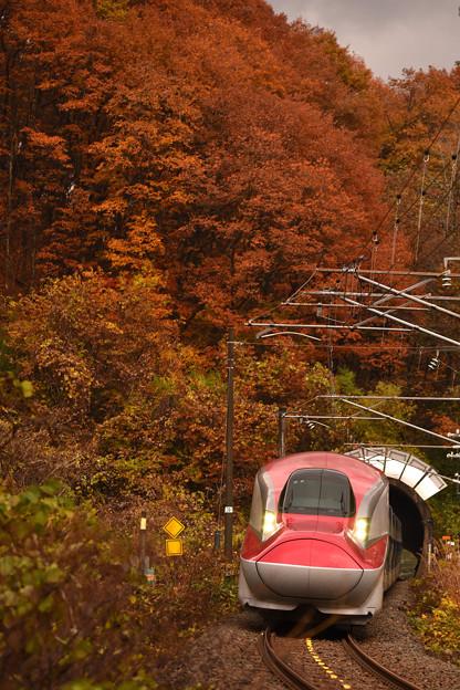 写真: 紅葉の刺巻トンネル2