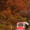 Photos: 紅葉の刺巻トンネル2