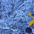 大雪の元日2