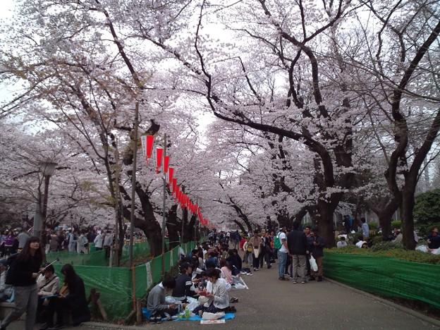 少しは桜の写真を。