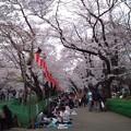 Photos: 少しは桜の写真を。