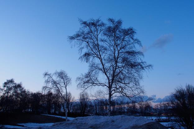 bare trees.4