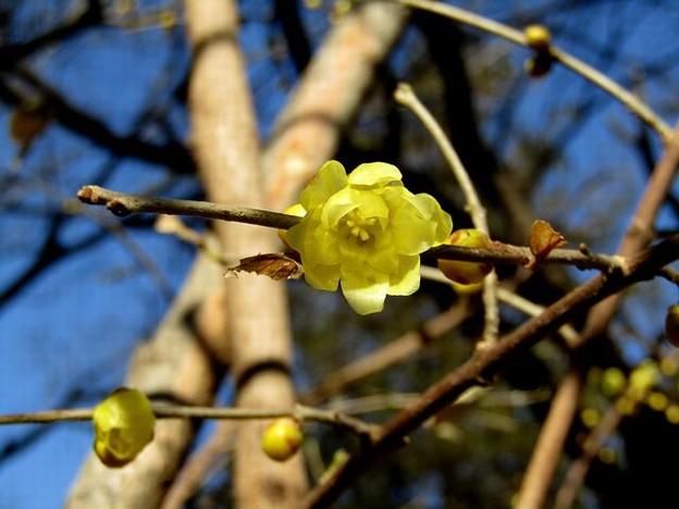 Photos: 香りの花