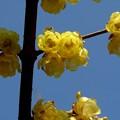 Photos: まだ咲いていました