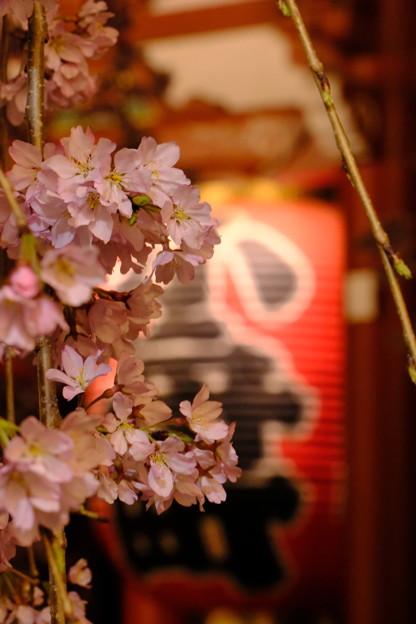 浅草寺の夜桜3