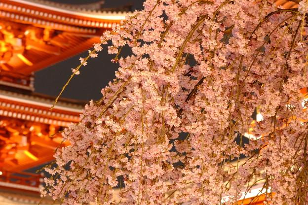 浅草寺の夜桜4