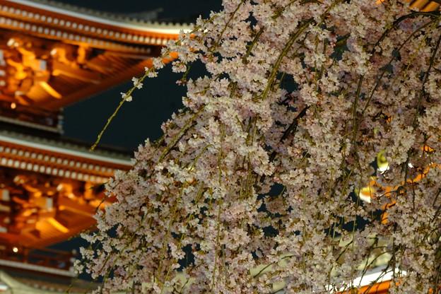 浅草寺の夜桜5