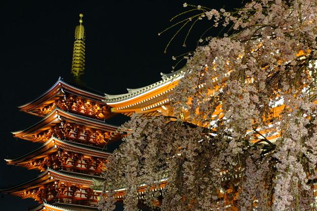 浅草寺の夜桜9
