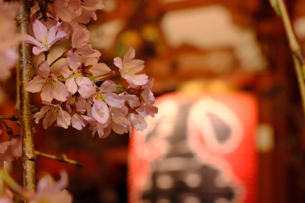 浅草寺の夜桜11