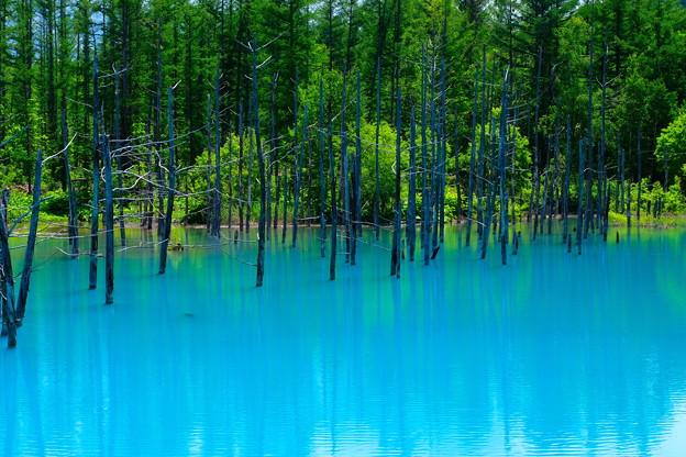 写真: 美瑛 青い池4