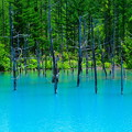 写真: 美瑛 青い池8