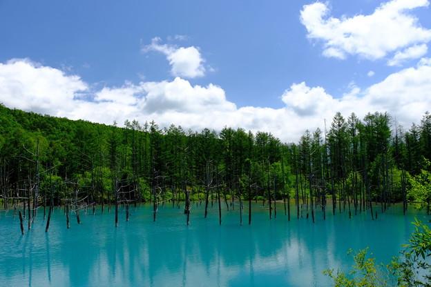 美瑛 青い池1
