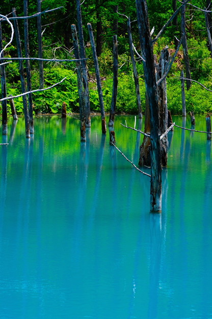 美瑛 青い池7