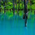 写真: 美瑛 青い池7
