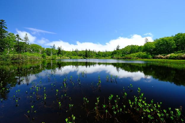 初夏の神仙沼