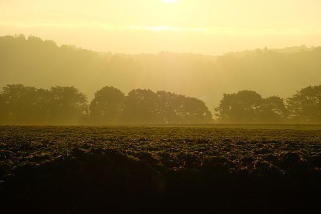 朝日を浴びる畑