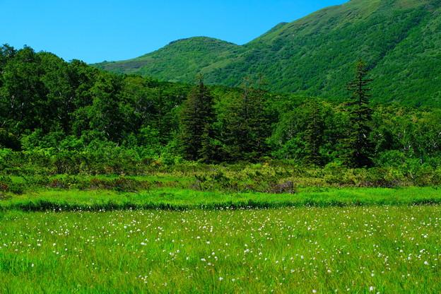 神仙沼湿原の夏 その3