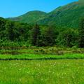 写真: 神仙沼湿原の夏 その3