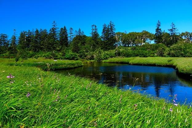神仙沼湿原の夏 その2