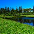 写真: 神仙沼湿原の夏 その2