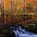 写真: 水辺の紅葉その1