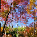 秋の祇王寺 その2
